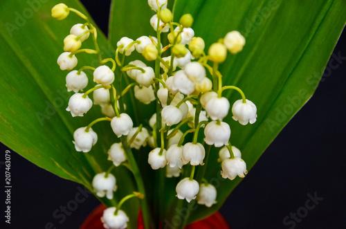Staande foto Lelietje van dalen beautiful flowers on the table, field flowers