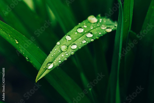 Canvas Print Beautiful vivid shiny green grass with dew drops close-up with copy space