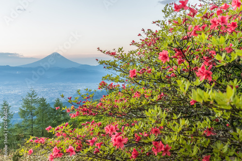 Fotobehang Azalea Japanese Azalea flower and Mountain Fuji in spring season. Azalea or Tsutsuji - Spring Flowers in Japan