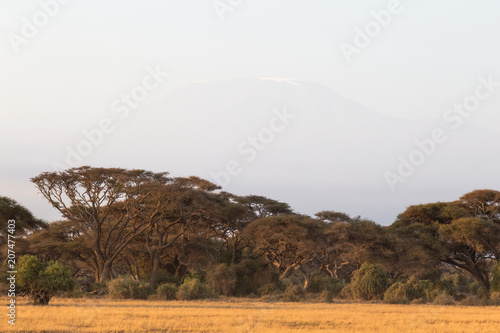 Fotobehang Wit A small forest in the savannah. Amboseli. Kenya, Africa