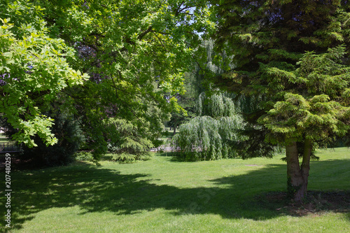 Papiers peints Jardin green springtime trees at city park