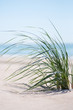 Green grass on Baltic sea beach.