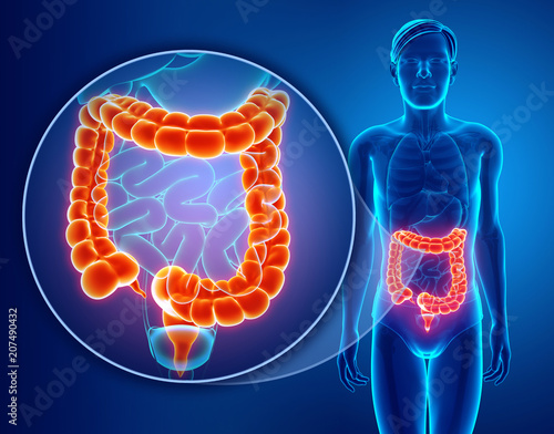 Photo 3d Render of Human Large Intestine