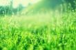 Leinwandbild Motiv Green grass background with copy space. Summer nature landscape