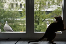 Cute Abyssinian Cat Watching At Birds Outside The Window