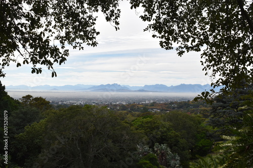 Landscape at the Botanical Garden with the city in background in Cape Town in South Africa