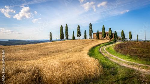 Keuken foto achterwand Toscane Tuscan cypress
