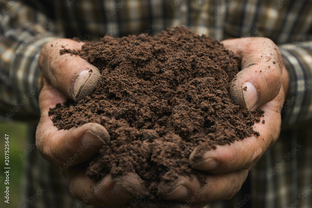 Fototapeta closeup hand of person holding abundance soil for agriculture or planting peach.