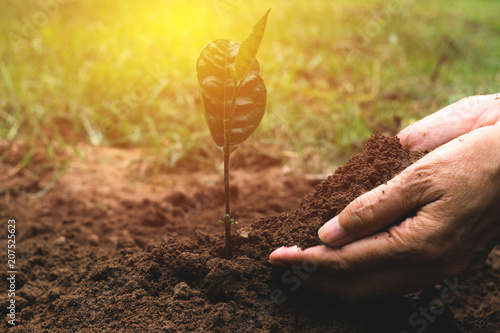 Fototapeta closeup hand of person holding abundance soil for agriculture or planting peach. obraz
