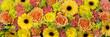 canvas print picture - gelbe und orange Blumen als Hintergrund oder Banner