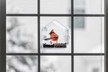 One Male Red Northern Cardinal, Cardinalis, Bird Sitting Perched On Plastic Glass Window Feeder During Heavy Winter Snow Colorful In Virginia, Snow Flakes Falling