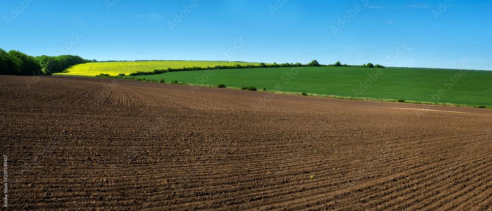 Fototapeta farm field lines of arable land and rapeflowerfield landscape
