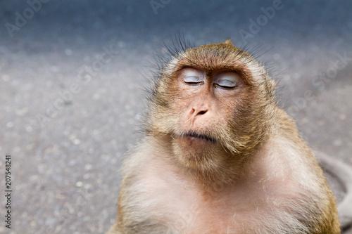 In de dag wild crab-eating macaque