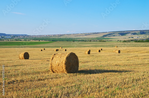 Wall Murals Melon Round straw bales on field