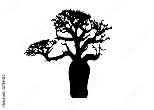 Valokuva Boab or Baobab Tree Vector isolated, tree silhouette icon