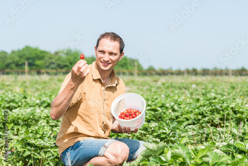 Young happy smiling man picking strawberries in green field rows farm, carrying Fototapeta
