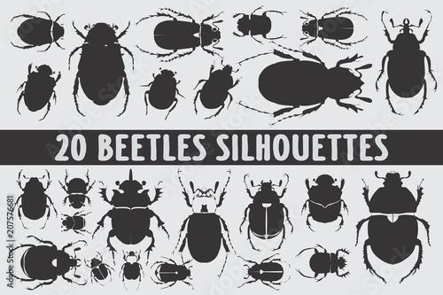 Fotografia 20 Beetles Silhouettes various design set