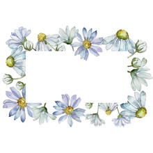 White Daisy. Floral Botanical ...