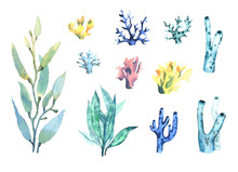 A Set Of Watercolor Coral And ...