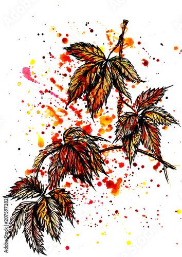 Papiers peints Visage de femme Watercolor autumn leaf set of tropical leaves and splashes