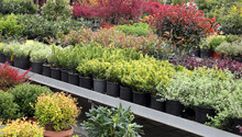 Plants For Sale In The Greenho...