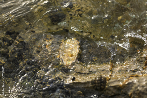 sea snails and seashells in sea water on stones