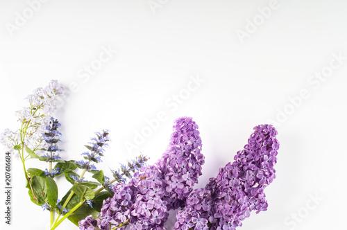 kwiaty bzu na białym tle - fototapety na wymiar