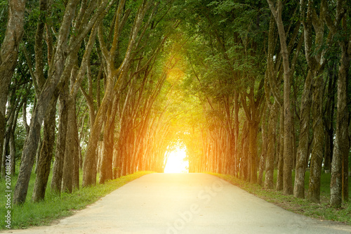 Cadres-photo bureau Route dans la forêt Landscape of straight road under the trees, the famous Longtien green tunnel.