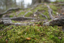 Close-up Of Green Moss In Spri...