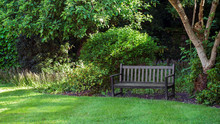 An Empty Wooden Park Bench Under The Tree In English Garden Setting