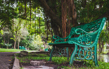Green Bench Under The Banyan T...
