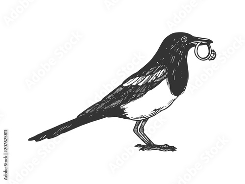Magpie bird with golden ring engraving vector Canvas Print