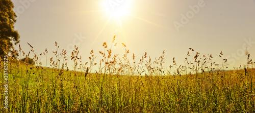Valokuva Gräser
