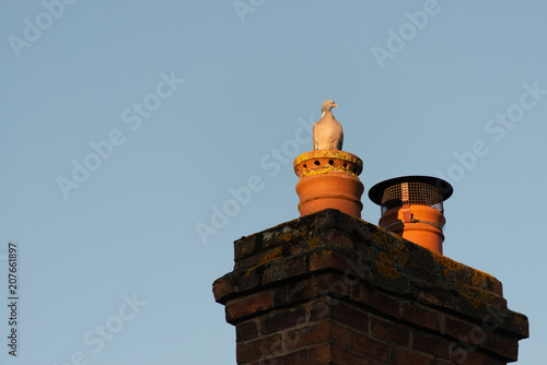 angry looking pigeon sat on orange clay and red brick chimney pot in England wit Fototapeta