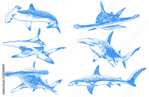 Obraz Graphical color set of hammerhead sharks isolated on white background,vector tattoo illustration - fototapety do salonu