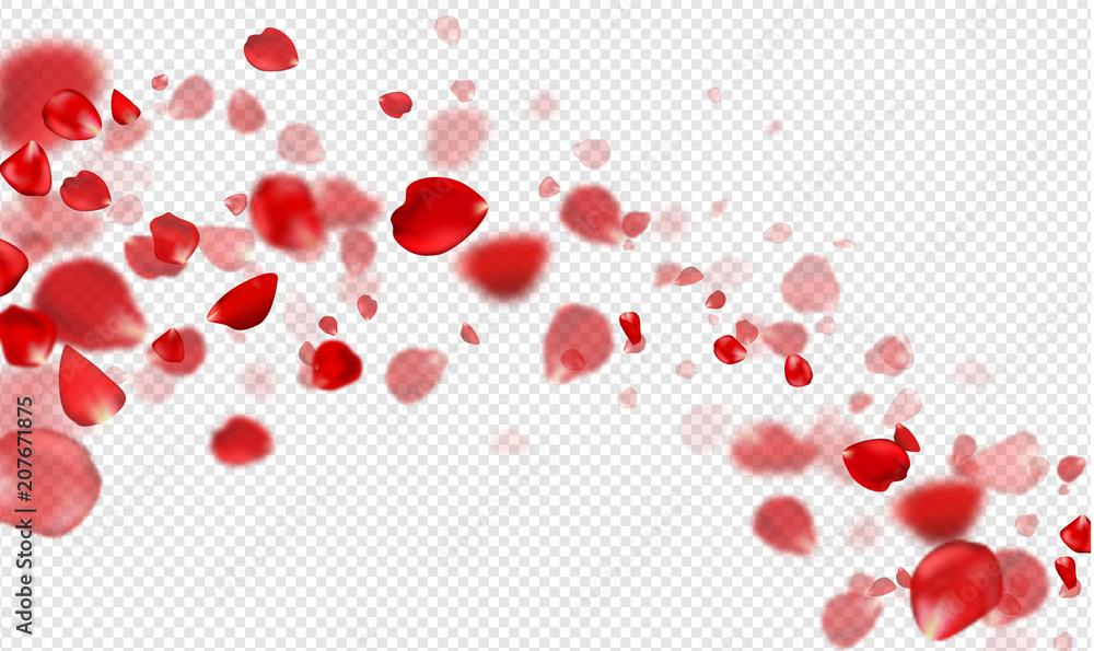 Fototapeta Falling Red rose petals on a transparent background.Vector illustration