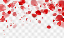 Falling Red Rose Petals On A Transparent Background.Vector Illustration