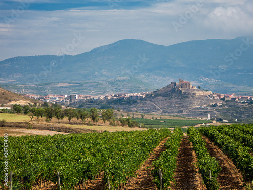 Rioja vineyard landscape
