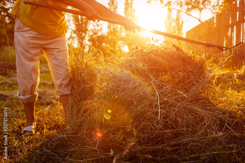 Fotografering  Farmer woman gathers hay with pitchfork at sunset in countryside