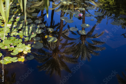 Photo Jardin Majorelle landscape