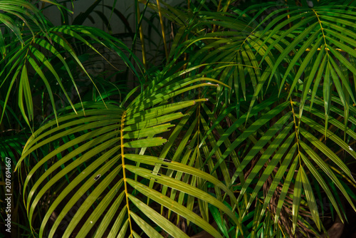 Ingelijste posters Tropische Bladeren Leaves in tropical rainforest