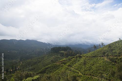 Poster Wit Landscape in the highlands of Sri Lanka.