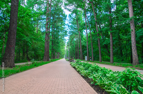 Foto op Plexiglas Groene Awesome long walking alley in the summer. Cobbled road (paving slabs) among the dense fairy forest in the city park, perspective.