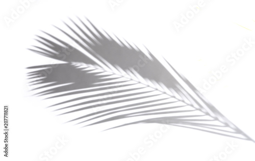 Shadows of coconut leaf on a white background.