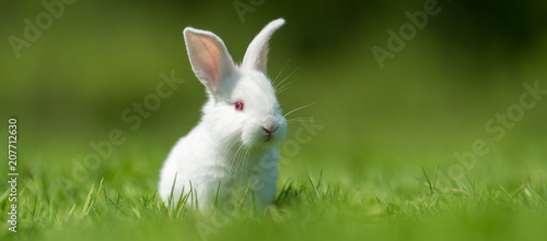 Foto Baby white rabbit in grass