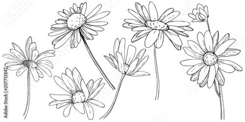 Photo Daisy in a vector style isolated