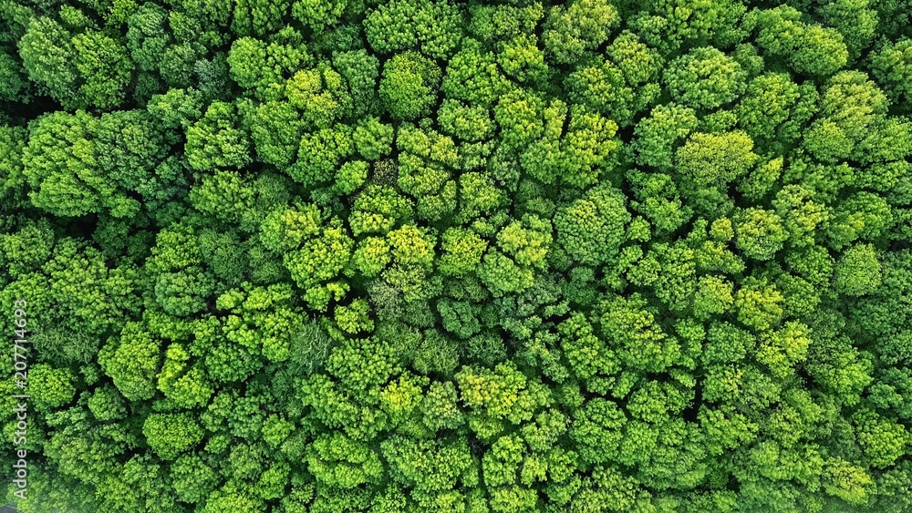 Fototapety, obrazy: Top view of a young green forest in spring or summer