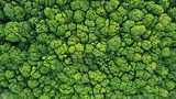 Fototapeta Las - Top view of a young green forest in spring or summer