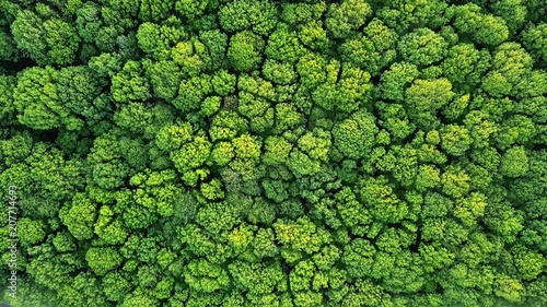 Top view of a young green forest in spring or summer - 207714693