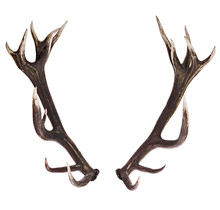Deer Antlers Isolated On White